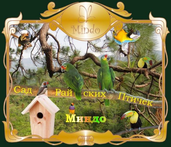 """Сад Райских Птичек """"Миндо"""", источник фото: https://vk.com/sadptichek"""