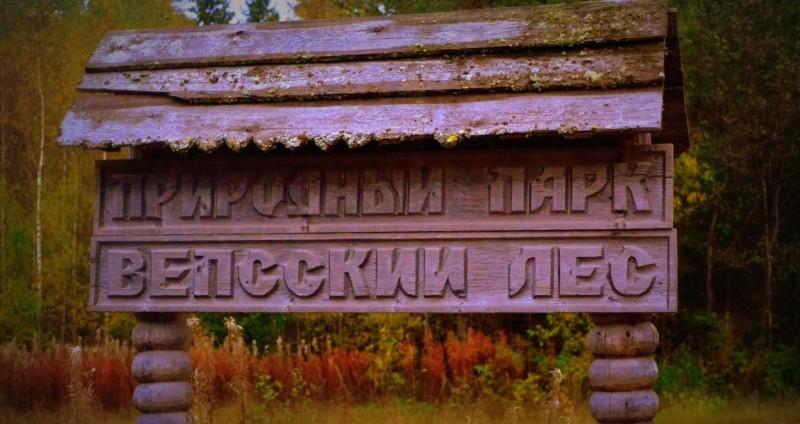 Вепсский лес, источник фото: http://www.vepsles.spb.ru