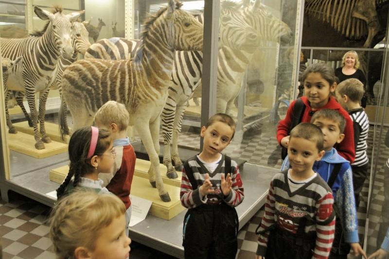 Зоологический музей, источник фото: https://vk.com/topic-75576468_30630395 Автор: Татьяна Измайлова