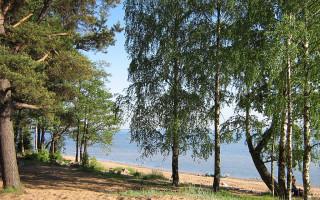Комаровский берег. Фото: СЕВА ЗЛОВ