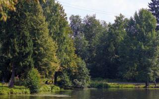 Шуваловский парк. Фото: Alexey Komarov