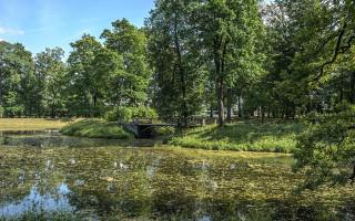 Пруды Нового сада в Александровском парке. Автор фото: Florstein (WikiPhotoSpace)