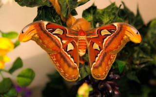 """Музей бабочек """"Тропический Рай"""""""