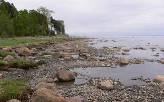 Финский залив. Санкт-Петербург. Комарово. Фото: Kondratyev (Wikimedia Commons)