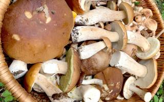 Как правильно собирать грибы? Фото: vk.com/club94833853
