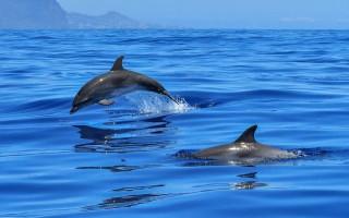 Дельфины океана. Морские Млекопитающие. Источник фото: pixabay.com