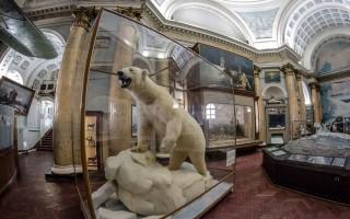Ночь музеев 2018 в Музее Арктики и Антарктики