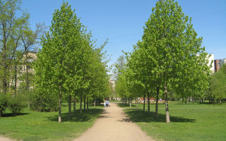 Выборгский сад. Фото: Екатерина Борисова (Wikimedia Commons)
