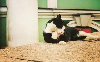 Эрмитажные коты. Фото: hermitagecats.ru