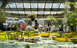 Ботанический сад БИН РАН. Фото: Марина Ичетовкина