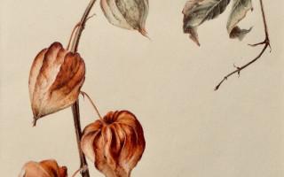 Выставка «Осенних красок нежное сиянье»