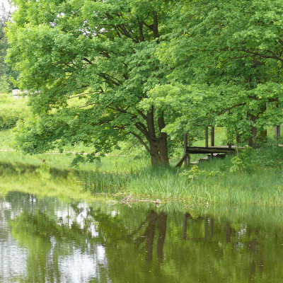 Деревянный причал в Приютино, источник фото: Wikimedia Commons Автор: Владимир Синьков