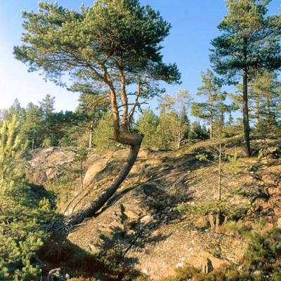 Ладожские шхеры, источник фото: http://parks.karelia.ru/ladoga/rus/3.html