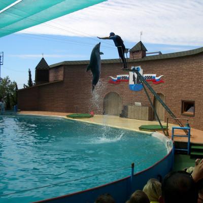 Представление в Утришском дельфинарии. Автор: Vlsergey, Wikimedia Commons