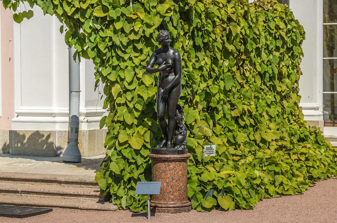 """Скульптура """"Венера Медицейская"""" в Ораниенбаумском парке. Автор фото: Florstein (WikiPhotoSpace)"""