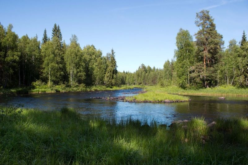 Вепсский лес, источник фото: www.vepsles.spb.ru