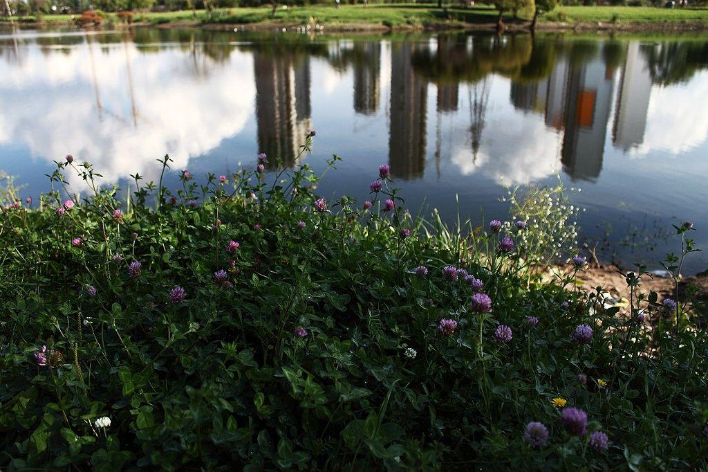 Старое русло реки Волковки в районе парка Интернационалистов. Фото: Messir (Wikimedia Commons)