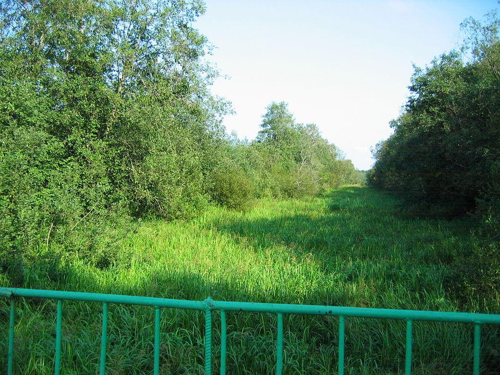 Заросший Петровский канал, 2007 г. Фото: Yanachka (Wikimedia Commons)
