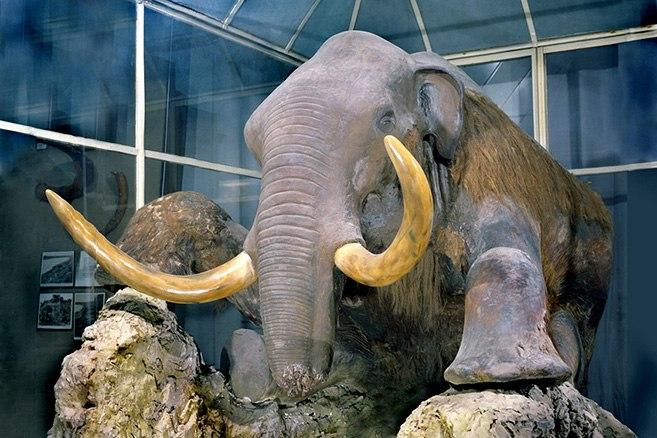 Зоологический музей, источник фото: https://vk.com/topic-75576468_30630395